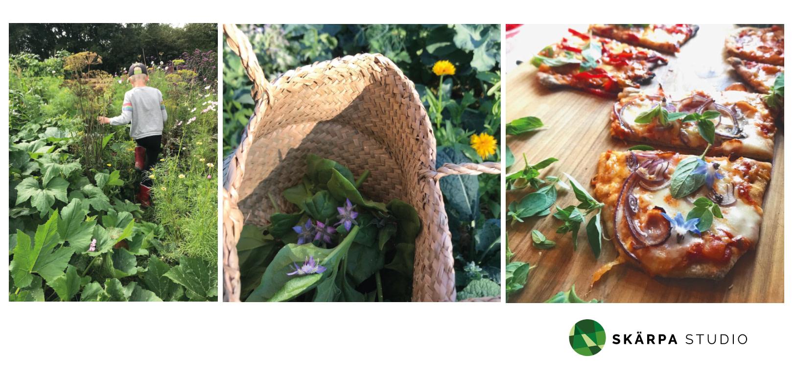 skolgård odla i skolan pedagogisk odling hardeberga lund skåne från jord till bord