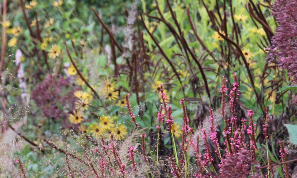 perenner växtkomposition staden offentlig miljö