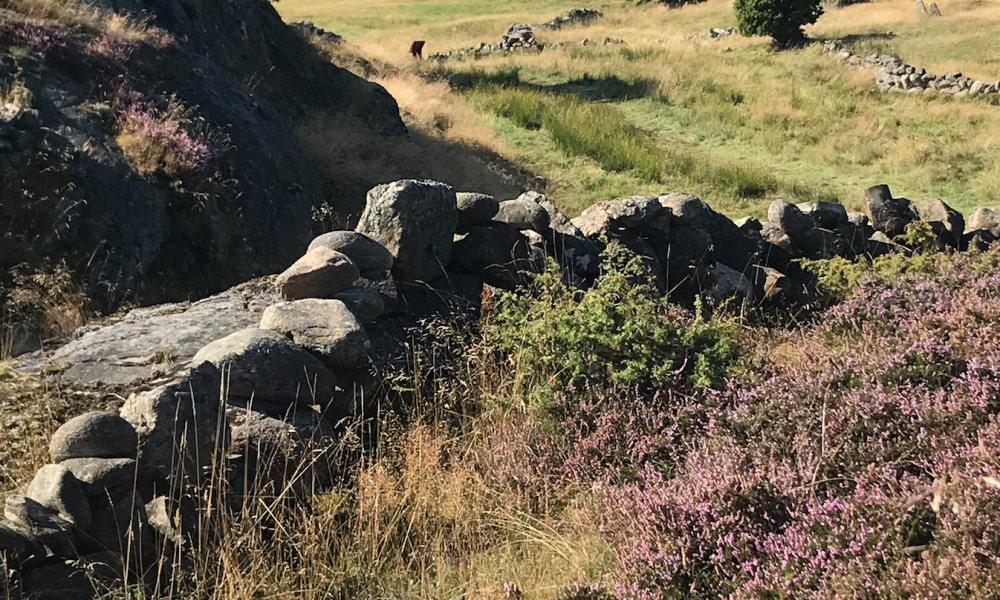 Pilane landscaping Skåne