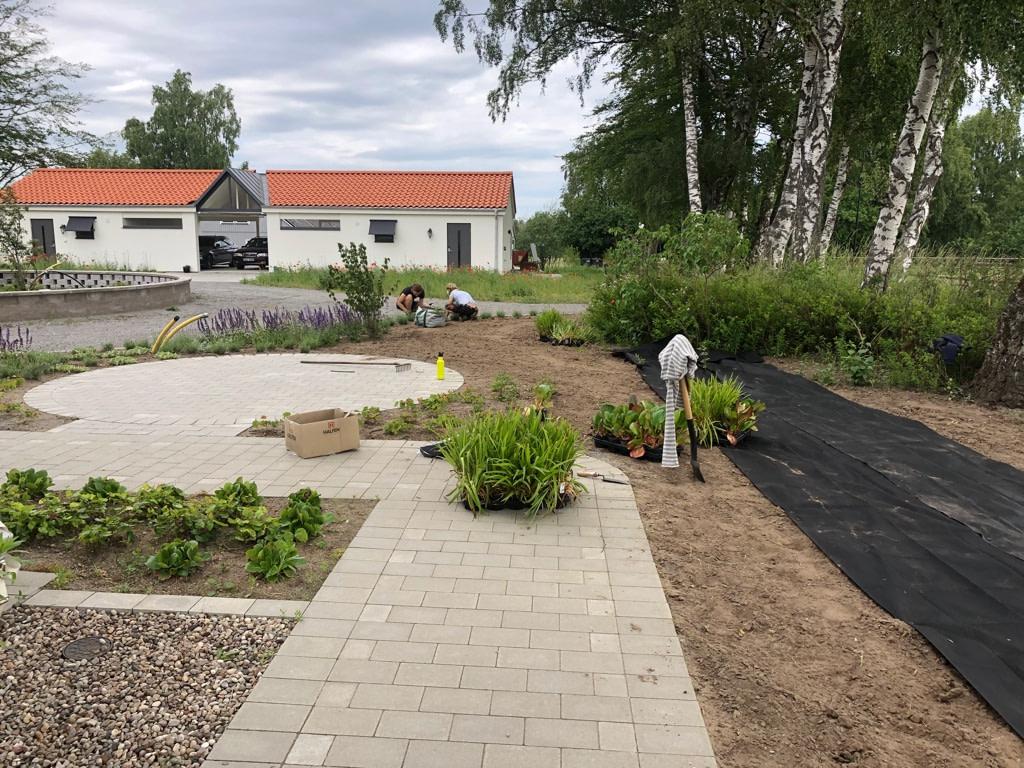 Grönytor växtkomposition Blentarp Lund Skåne landskapsarkitekt